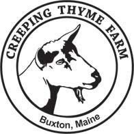 Creeping-Thyme