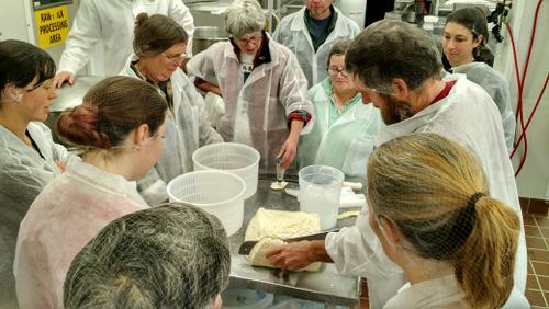 Cutting the pasta filata curd cake