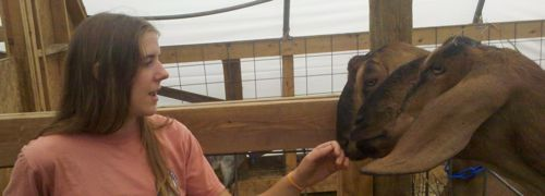 Arline and the greeter goats
